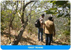 forest-trekking